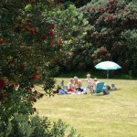 North Piha picnic