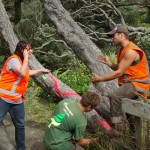 Council staff and arborist confer about vandalism on pohutukawa, Beach Valley Road, 2012
