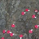 Poppies on the rock 2008