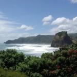 Tasman Lookout Track 2