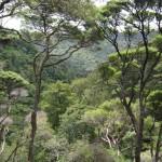 Knutzen Track, Kitekite Falls