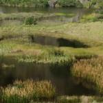 Whatipu Scientific Reserve