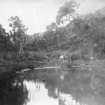 History of the Lily Pond