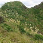 Recommended Protected Natural Areas at Piha
