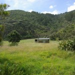 Camping on regional parks around Piha