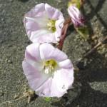 Native Plants J-N