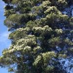 Native Plants A-D
