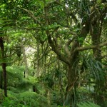 Coastal forest on Comans Track