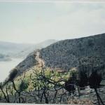The Pearce bush regeneration project – background