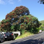 Pohutukawa cut and damaged in house moving