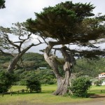 Domain macrocarpas to be protected from further harm