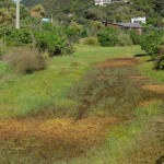 Domain Alligator Weed to be sprayed