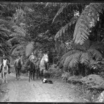 The Cowans of Piha