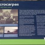 New interp for Piha macrocarpa