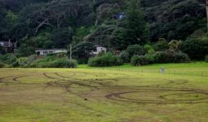 Wheelies on the Domain grass