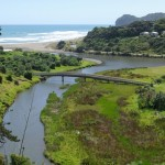 Streamside planting in Piha Stream