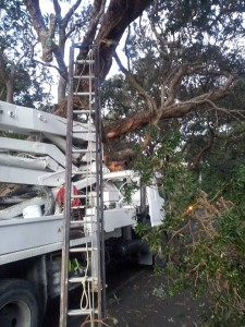 Beach Valley Rd - tree bough removed after being hit by truck