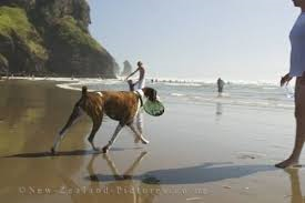 north piha dogs