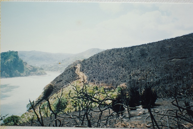 Scorched earth, after the fire 1994