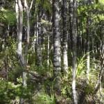 A satisfying walk in the park, McKenzie and Maungaroa Ridge Tracks