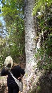 mel and kauri centennial track