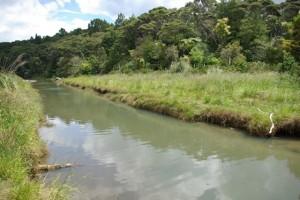 Kakamatua on the Manukau Coast is a big dog walking site.