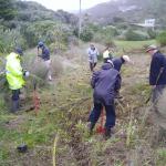 Third planting creates wetland at Domain gate
